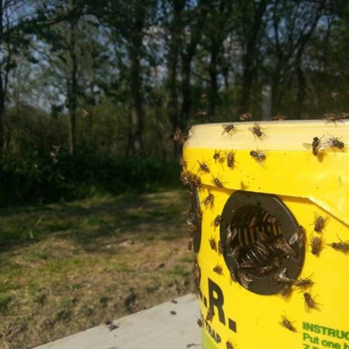 Wespen - vliegenbestrijding